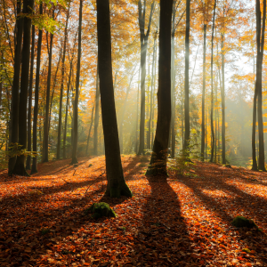 Comment limiter les effets de la fatigue saisonnière ?